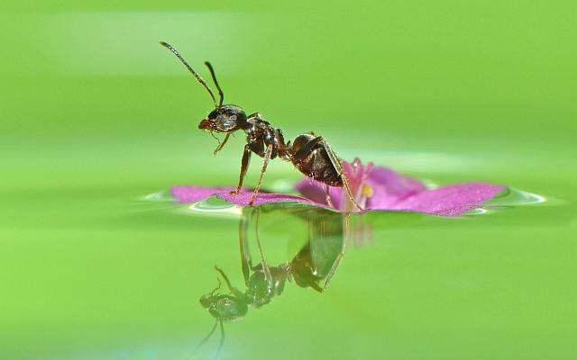 муравьишка на цветке рисунок.