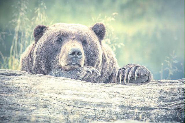 сказка о мужике и медведе